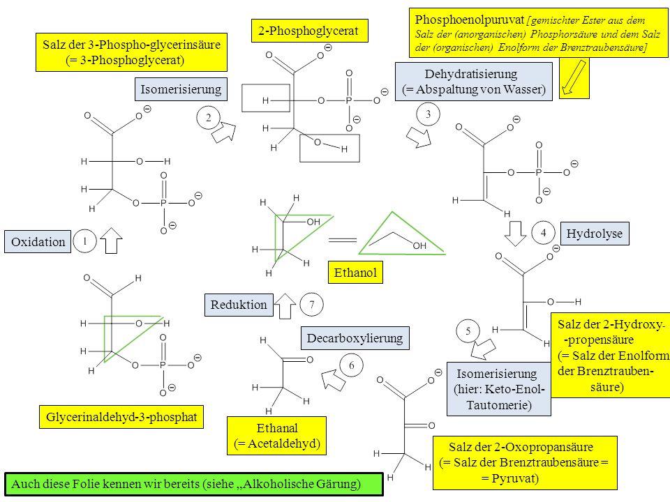 Oxidation Isomerisierung Dehydratisierung (= Abspaltung von Wasser) Hydrolyse Isomerisierung (hier: Keto-Enol- Tautomerie) Decarboxylierung Reduktion Ethanol Ethanal (= Acetaldehyd) Salz der 2-Oxopropansäure (= Salz der Brenztraubensäure = = Pyruvat) Salz der 2-Hydroxy - -propensäure (= Salz der Enolform der Brenztrauben- säure) 2-Phosphoglycerat Salz der 3-Phospho-glycerinsäure (= 3-Phosphoglycerat) Glycerinaldehyd-3-phosphat Phosphoenolpuruvat [gemischter Ester aus dem Salz der (anorganischen) Phosphorsäure und dem Salz der (organischen) Enolform der Brenztraubensäure] Auch diese Folie kennen wir bereits (siehe Alkoholische Gärung)