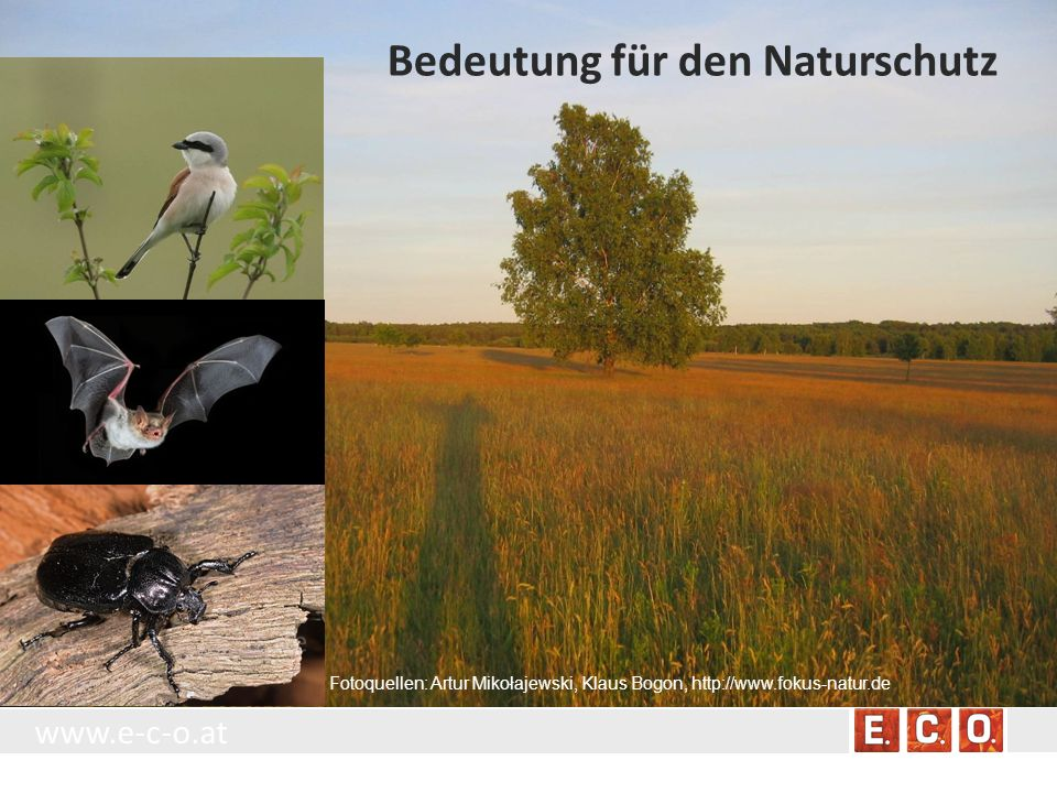 www.e-c-o.at Fotoquellen: Artur Mikołajewski, Klaus Bogon, http://www.fokus-natur.de Bedeutung für den Naturschutz