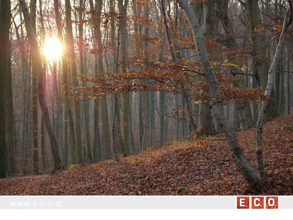 www.e-c-o.at 8.4.1 Einzelbäume und –sträucher Allgemeine Charakterisierung: Frei stehende Bäume und Sträucher bzw.
