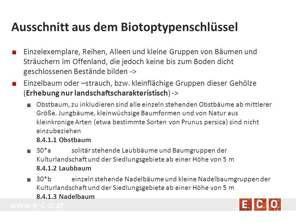 www.e-c-o.at Ausschnitt aus dem Biotoptypenschlüssel Einzelexemplare, Reihen, Alleen und kleine Gruppen von Bäumen und Sträuchern im Offenland, die je