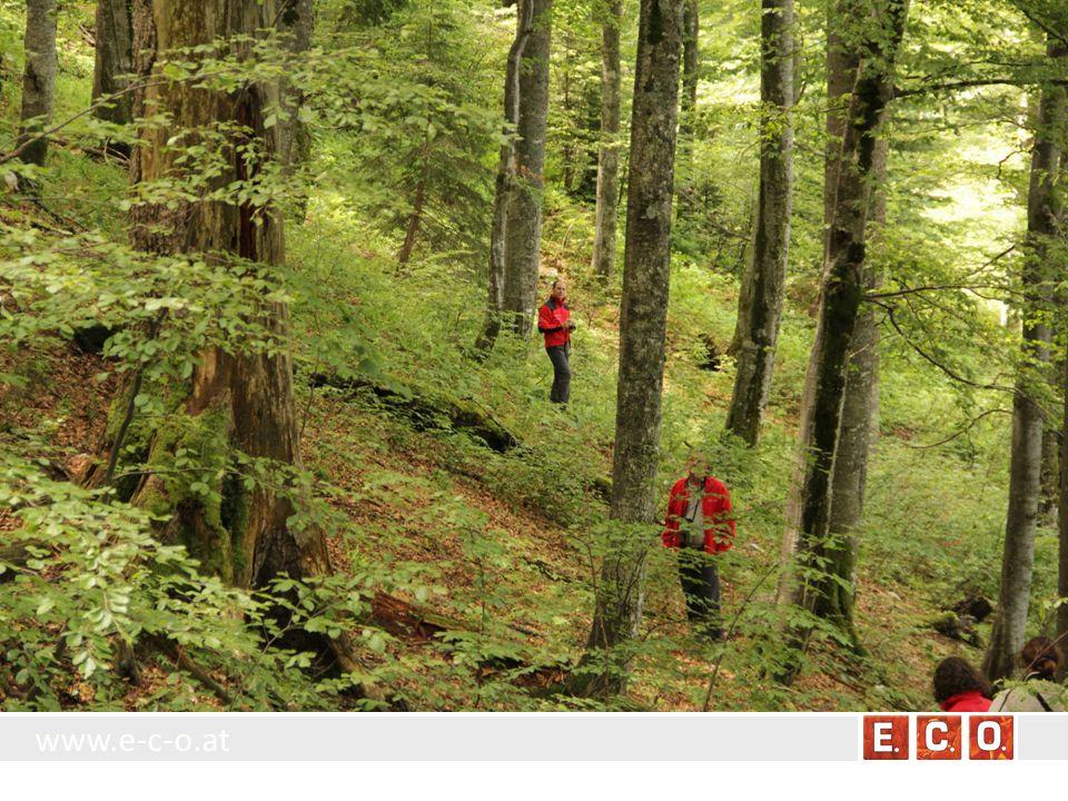 www.e-c-o.at BT 8.4.1.1 Obstbaum Standort: Einzeln stehende Obstbäume sowohl der offenen Landschaft, als auch des besiedelten Gebietes.