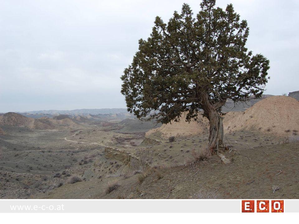 www.e-c-o.at Ausschnitt aus dem Biotoptypenschlüssel Einzelexemplare, Reihen, Alleen und kleine Gruppen von Bäumen und Sträuchern im Offenland, die jedoch keine bis zum Boden dicht geschlossenen Bestände bilden -> Einzelbaum oder –strauch, bzw.