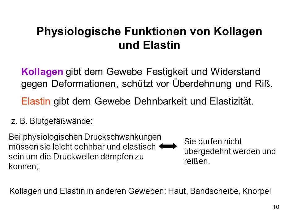 10 Physiologische Funktionen von Kollagen und Elastin Kollagen gibt dem Gewebe Festigkeit und Widerstand gegen Deformationen, schützt vor Überdehnung und Riß.
