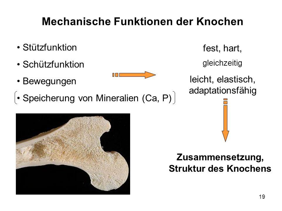 19 Mechanische Funktionen der Knochen Stützfunktion Schützfunktion Bewegungen Speicherung von Mineralien (Ca, P) fest, hart, gleichzeitig leicht, elastisch, adaptationsfähig Zusammensetzung, Struktur des Knochens