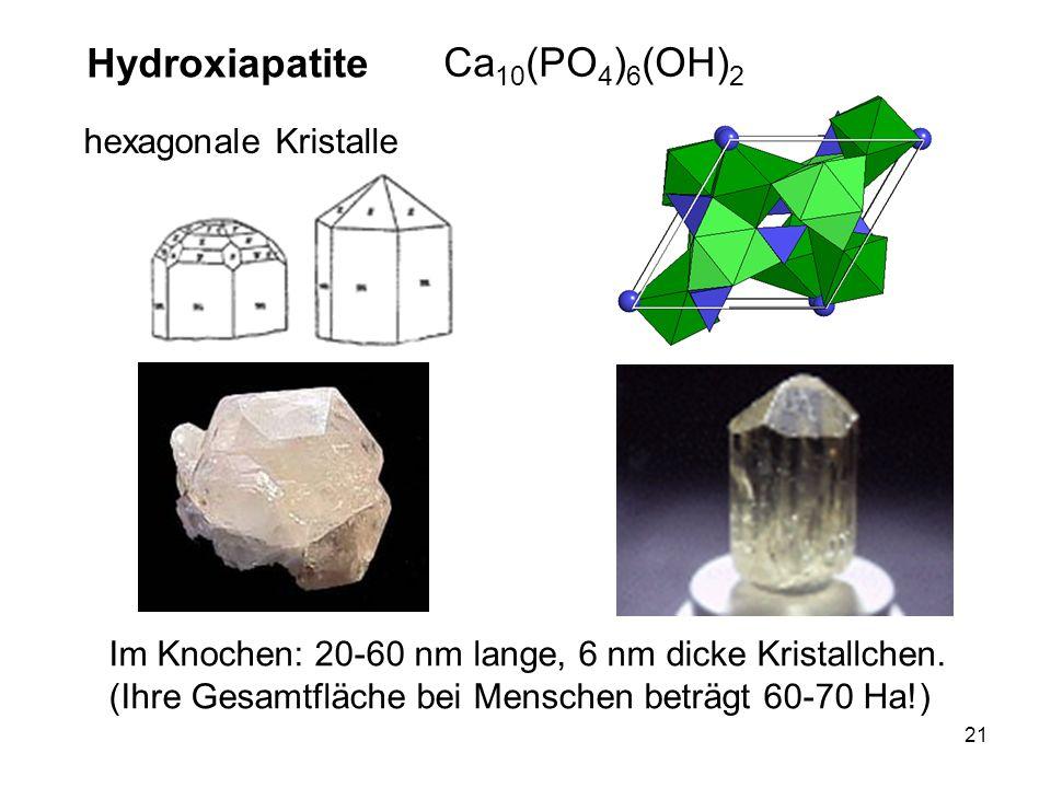 21 hexagonale Kristalle Im Knochen: 20-60 nm lange, 6 nm dicke Kristallchen. (Ihre Gesamtfläche bei Menschen beträgt 60-70 Ha!) Hydroxiapatite Ca 10 (