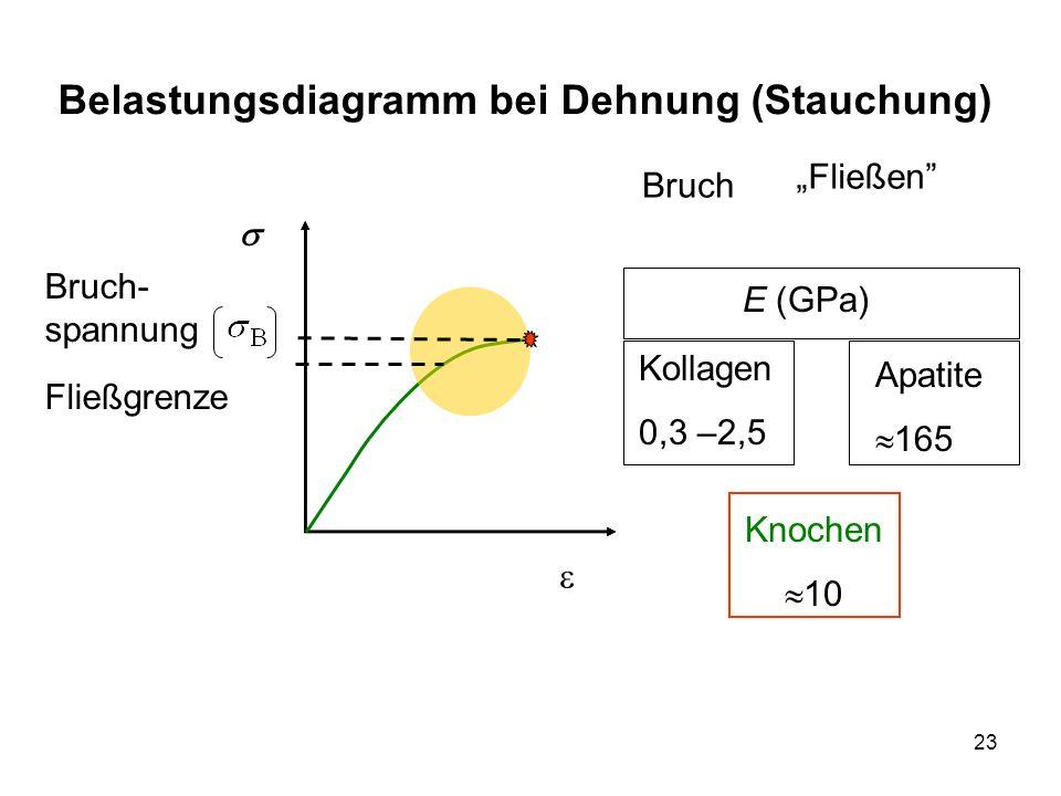 23 Belastungsdiagramm bei Dehnung (Stauchung) Knochen 10 E (GPa) Fließen Kollagen 0,3 –2,5 Apatite 165 Fließgrenze Bruch Bruch- spannung