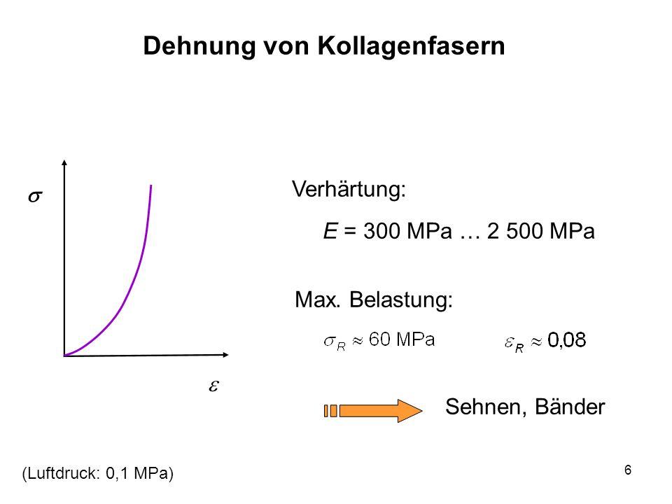 6 Dehnung von Kollagenfasern Verhärtung: E = 300 MPa … 2 500 MPa Max. Belastung: Sehnen, Bänder (Luftdruck: 0,1 MPa)