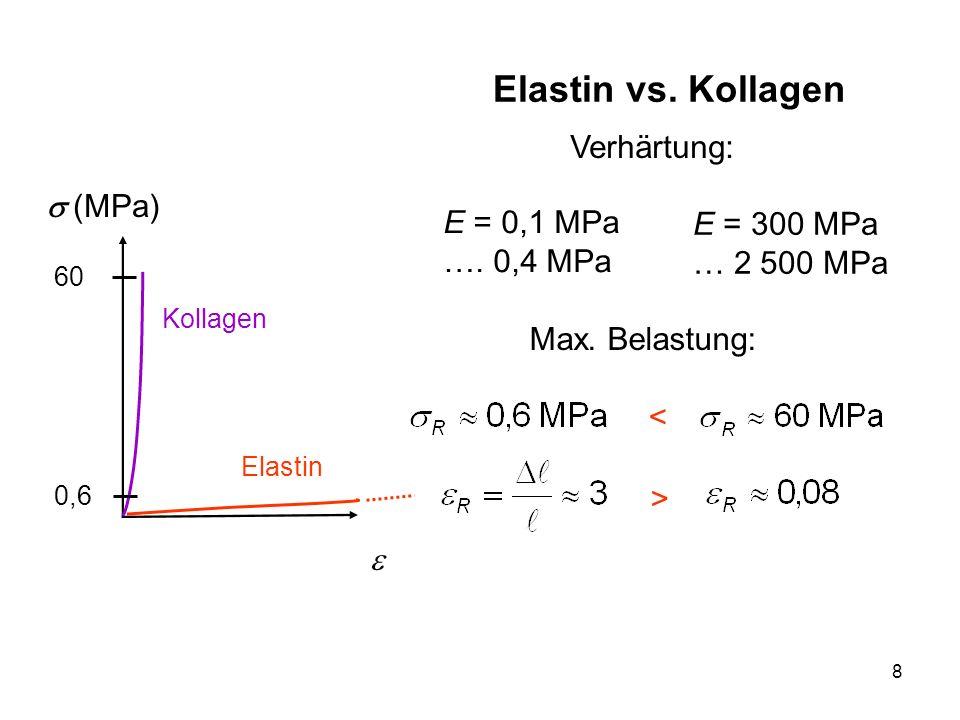 8 Elastin vs. Kollagen (MPa) Kollagen Elastin Verhärtung: E = 0,1 MPa …. 0,4 MPa Max. Belastung: 60 0,6 E = 300 MPa … 2 500 MPa < >