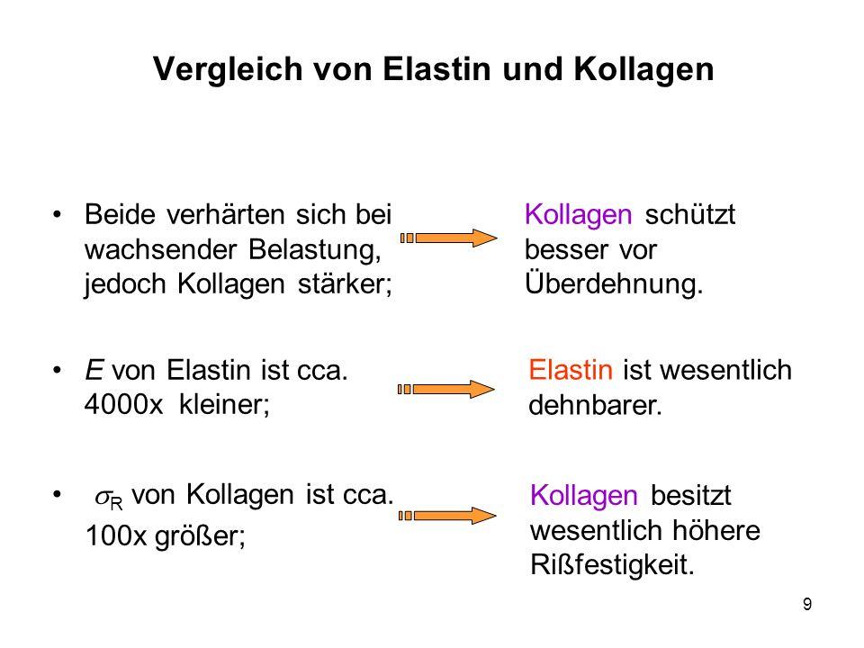 9 Vergleich von Elastin und Kollagen Beide verhärten sich bei wachsender Belastung, jedoch Kollagen stärker; E von Elastin ist cca. 4000x kleiner; R v