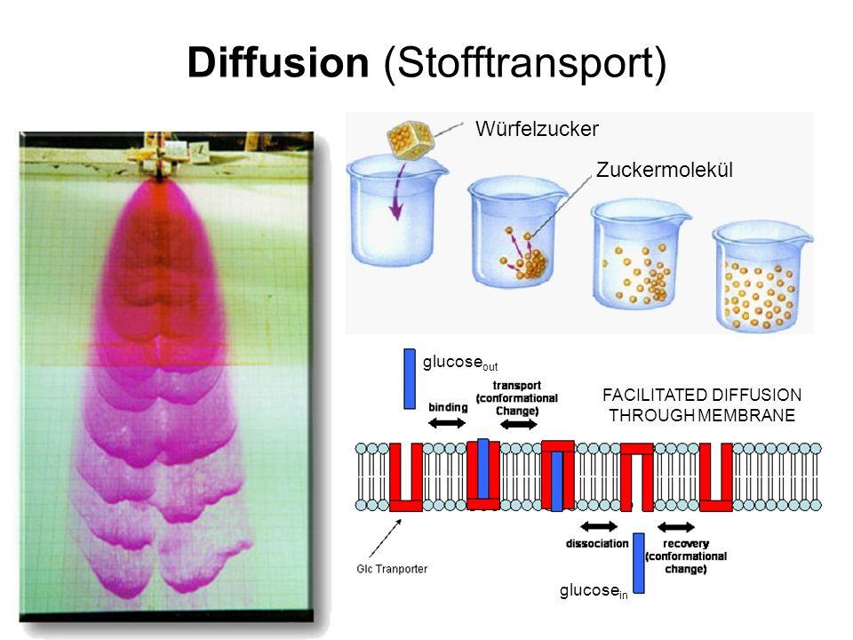 Diffusion (Stofftransport) Würfelzucker Zuckermolekül FACILITATED DIFFUSION THROUGH MEMBRANE glucose in glucose out
