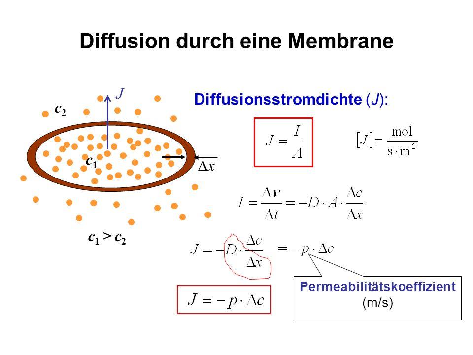 Diffusion durch eine Membrane Diffusionsstromdichte (J): x J c1c1 c2c2 c 1 > c 2 Permeabilitätskoeffizient (m/s)