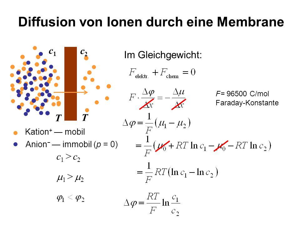 Diffusion von Ionen durch eine Membrane Im Gleichgewicht: c1c1 c2c2 c 1 > c 2 Kation + mobil Anion immobil (p = 0) 1 > 2 T T F= 96500 C/mol Faraday-Ko