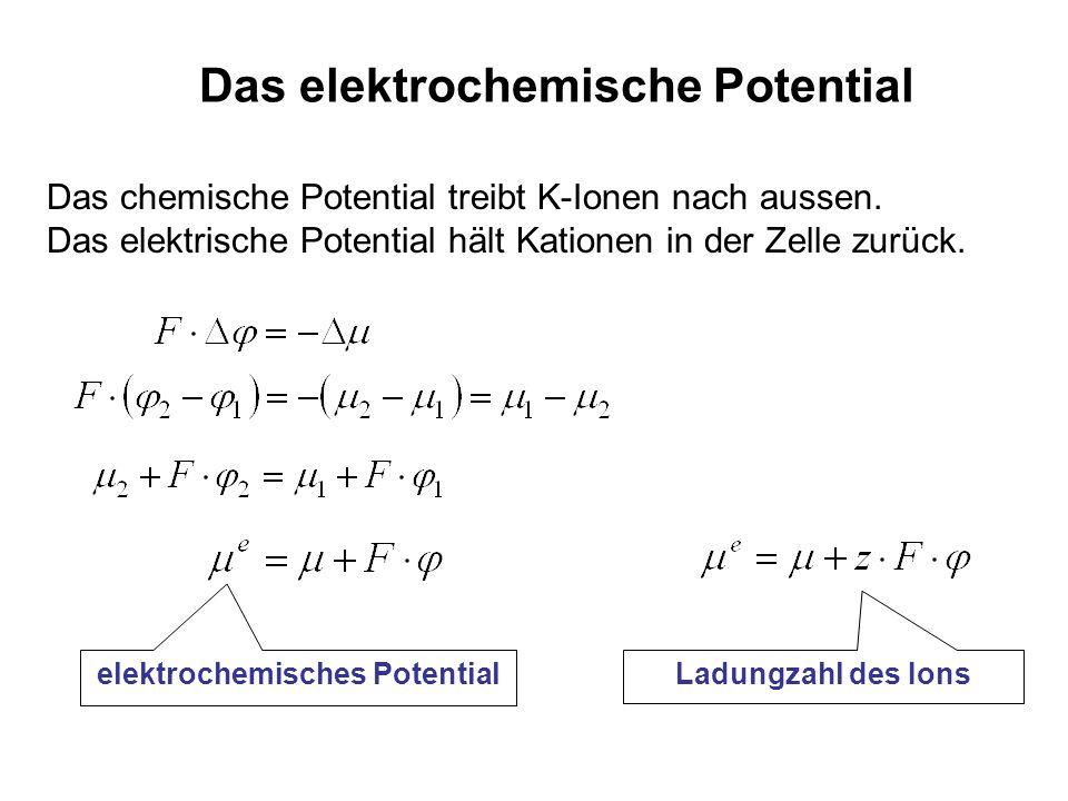 Das elektrochemische Potential elektrochemisches Potential Das chemische Potential treibt K-Ionen nach aussen. Das elektrische Potential hält Kationen
