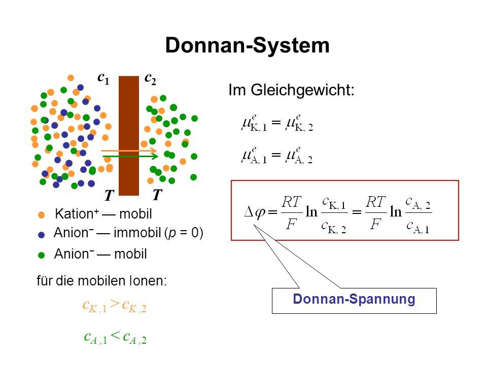 Donnan-System Im Gleichgewicht: c1c1 c2c2 c K,1 > c K,2 Kation + mobil Anion immobil (p = 0) T T Anion mobil für die mobilen Ionen: c A,1 < c A,2 Donn