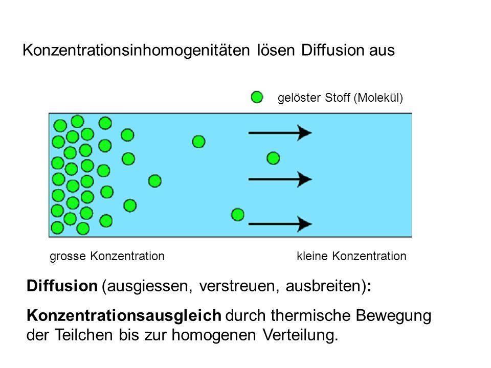 gelöster Stoff (Molekül) grosse Konzentrationkleine Konzentration Diffusion (ausgiessen, verstreuen, ausbreiten): Konzentrationsausgleich durch thermi