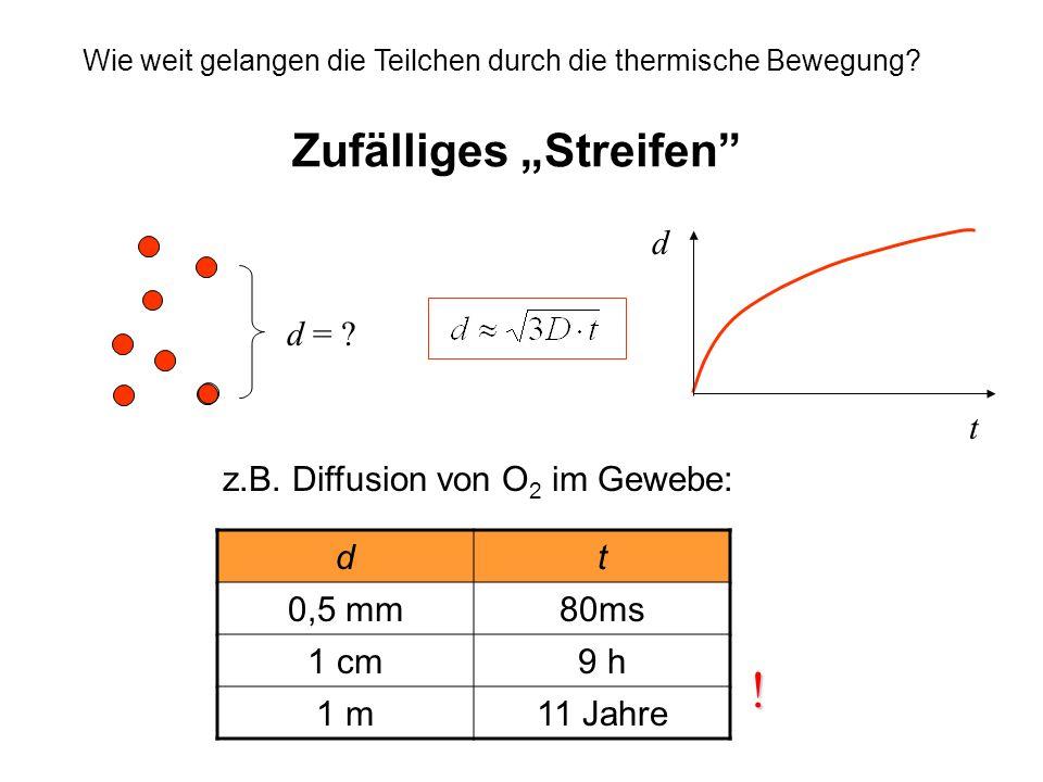Zufälliges Streifen Wie weit gelangen die Teilchen durch die thermische Bewegung? d t z.B. Diffusion von O 2 im Gewebe: dt 0,5 mm80ms 1 cm9 h 1 m11 Ja