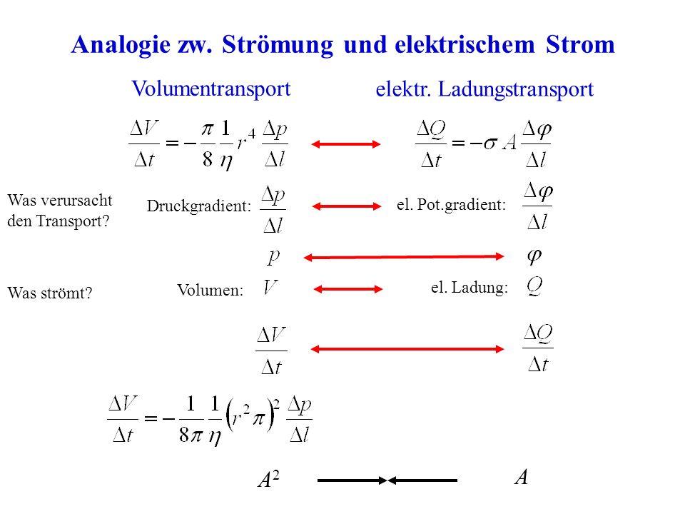Analogie zw. Strömung und elektrischem Strom Volumentransport elektr. Ladungstransport Was verursacht den Transport? Druckgradient: el. Pot.gradient: