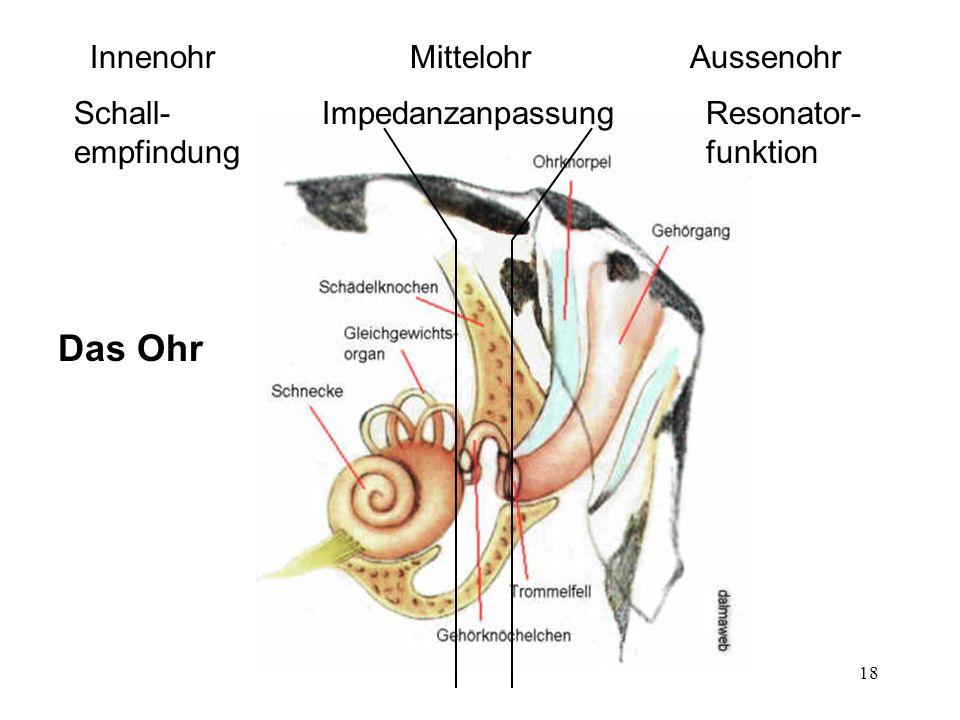 18 Das Ohr InnenohrAussenohrMittelohr Resonator- funktion ImpedanzanpassungSchall- empfindung