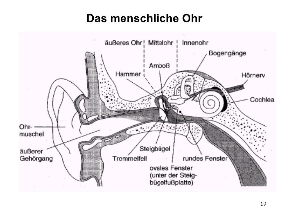 19 Das menschliche Ohr