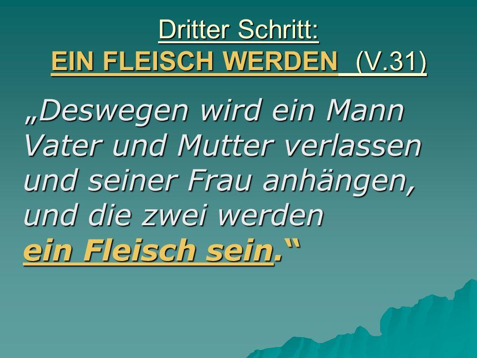 Dritter Schritt: EIN FLEISCH WERDEN (V.31) Deswegen wird ein Mann Vater und Mutter verlassen und seiner Frau anhängen, und die zwei werden ein Fleisch