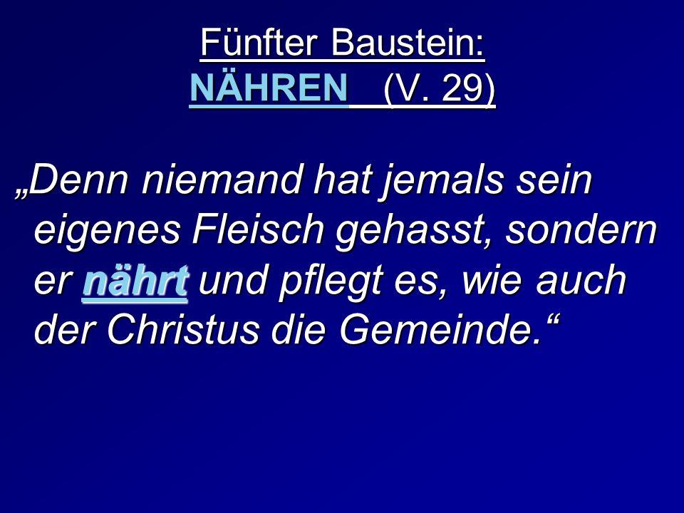 Fünfter Baustein: NÄHREN (V. 29) Denn niemand hat jemals sein eigenes Fleisch gehasst, sondern er nährt und pflegt es, wie auch der Christus die Gemei