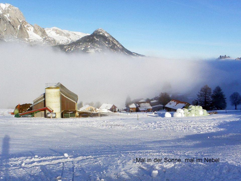 Nebel: Auf und ab !