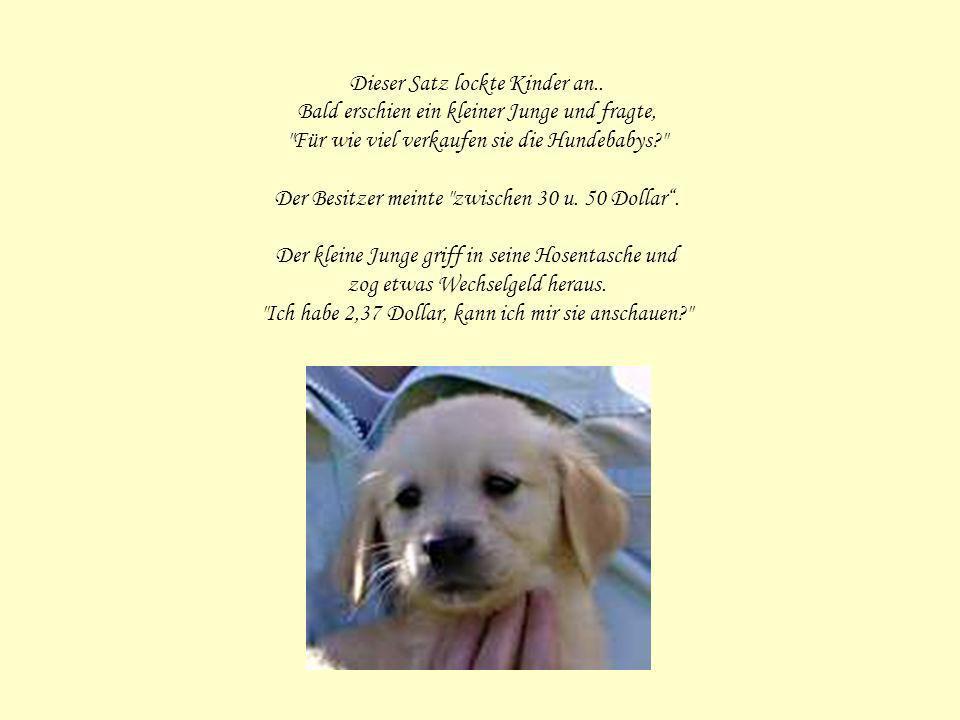 Ein Geschäftsinhaber hatte ein Schild über seine Tür genagelt, darauf war zu lesen Hundebabys zu verkaufen.