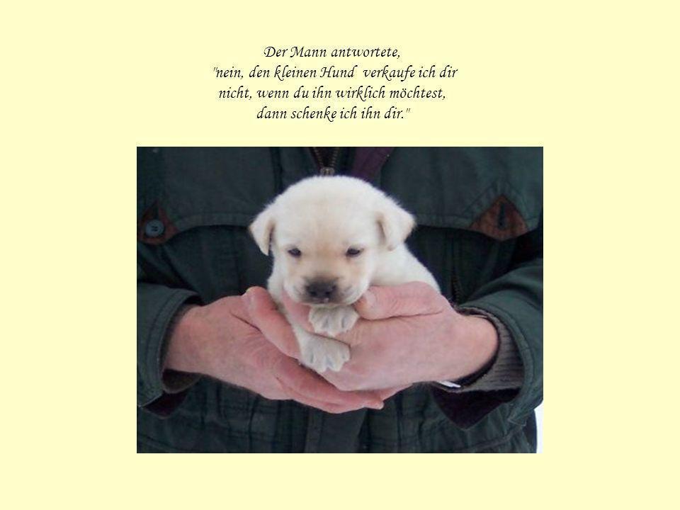 Der Mann antwortete, nein, den kleinen Hund verkaufe ich dir nicht, wenn du ihn wirklich möchtest, dann schenke ich ihn dir.
