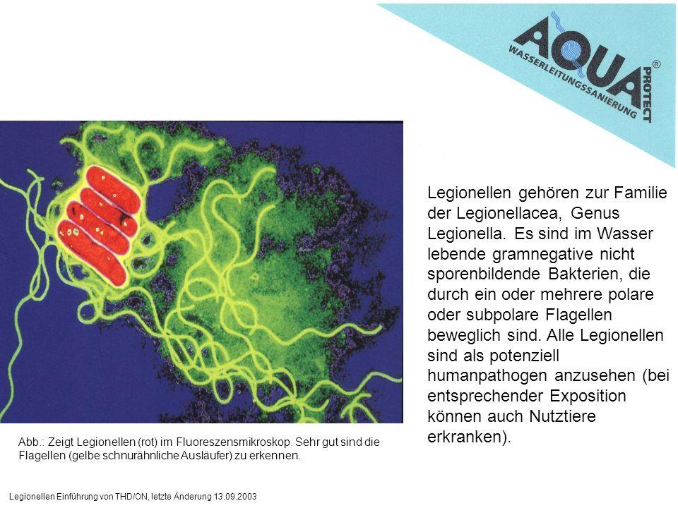 Legionellen Einführung von THD/ON, letzte Änderung 13.09.2003 Legionellen gehören zur Familie der Legionellacea, Genus Legionella. Es sind im Wasser l