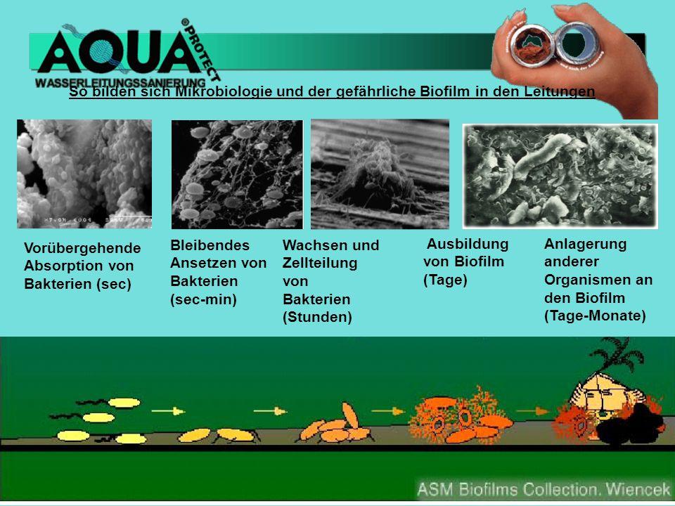 So bilden sich Mikrobiologie und der gefährliche Biofilm in den Leitungen Vorübergehende Absorption von Bakterien (sec) Bleibendes Ansetzen von Bakterien (sec-min) Wachsen und Zellteilung von Bakterien (Stunden) Ausbildung von Biofilm (Tage) Anlagerung anderer Organismen an den Biofilm (Tage-Monate)
