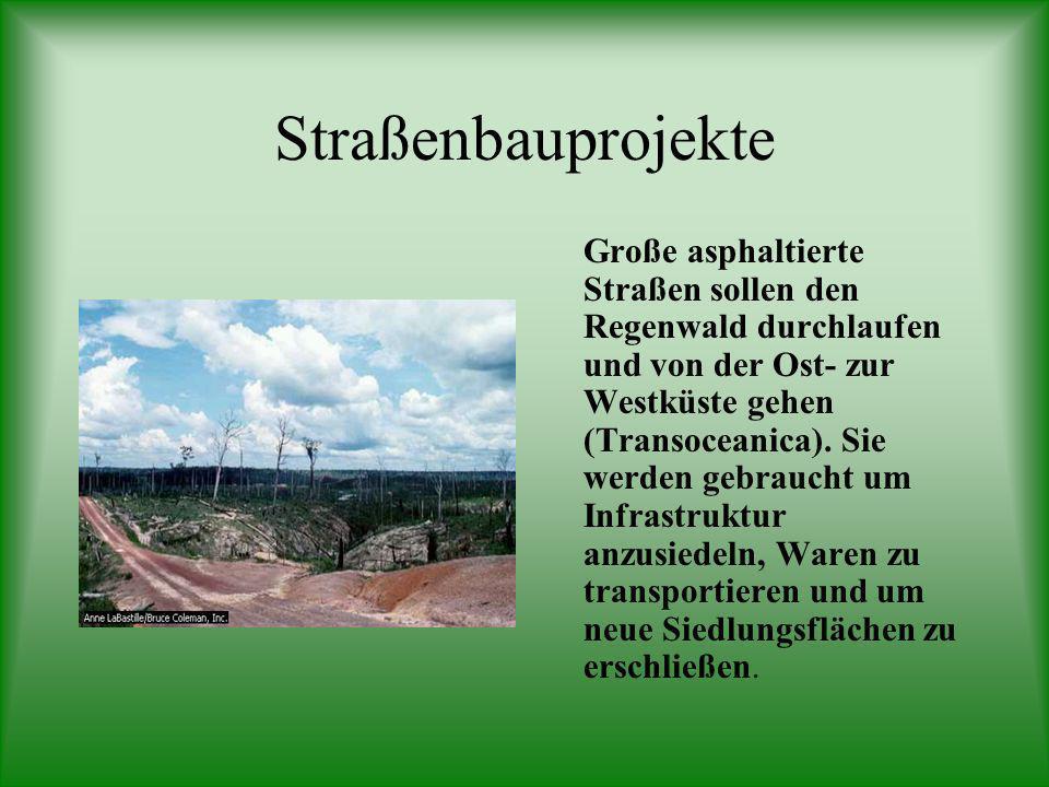 Argumente gegen Bauprojekte 1.Das Abholzen zerstört die Böden und fördert Bodenerosion. 2.Zerstörung der Lebensgrundlage der Ureinwohner des Regenwald