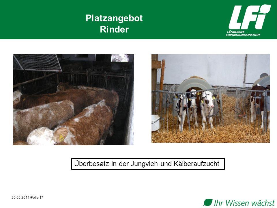 20.05.2014 /Folie 17 Platzangebot Rinder Überbesatz in der Jungvieh und Kälberaufzucht