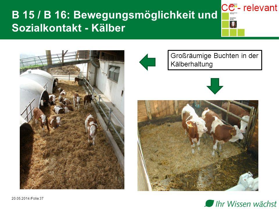 B 15 / B 16: Bewegungsmöglichkeit und Sozialkontakt - Kälber 20.05.2014 /Folie 37 Großräumige Buchten in der Kälberhaltung