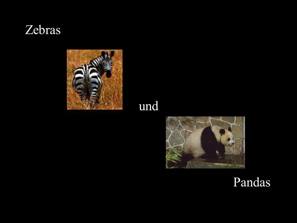 Welche Tiere sind schwarz und weiß?