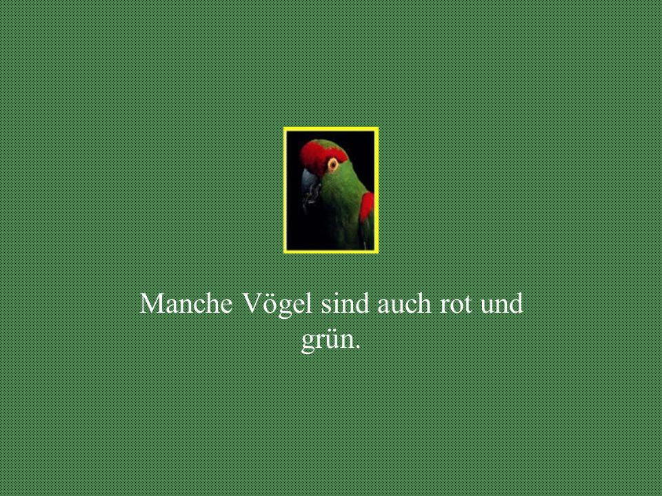Manche Vögel sind rot.