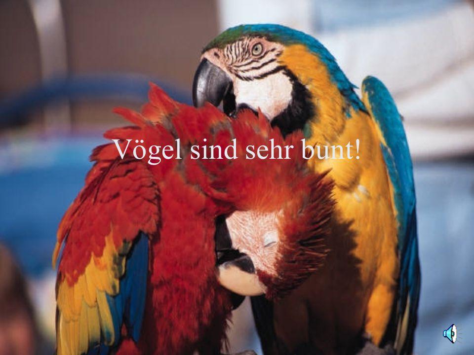 Manche Vögel sind auch rot und grün.