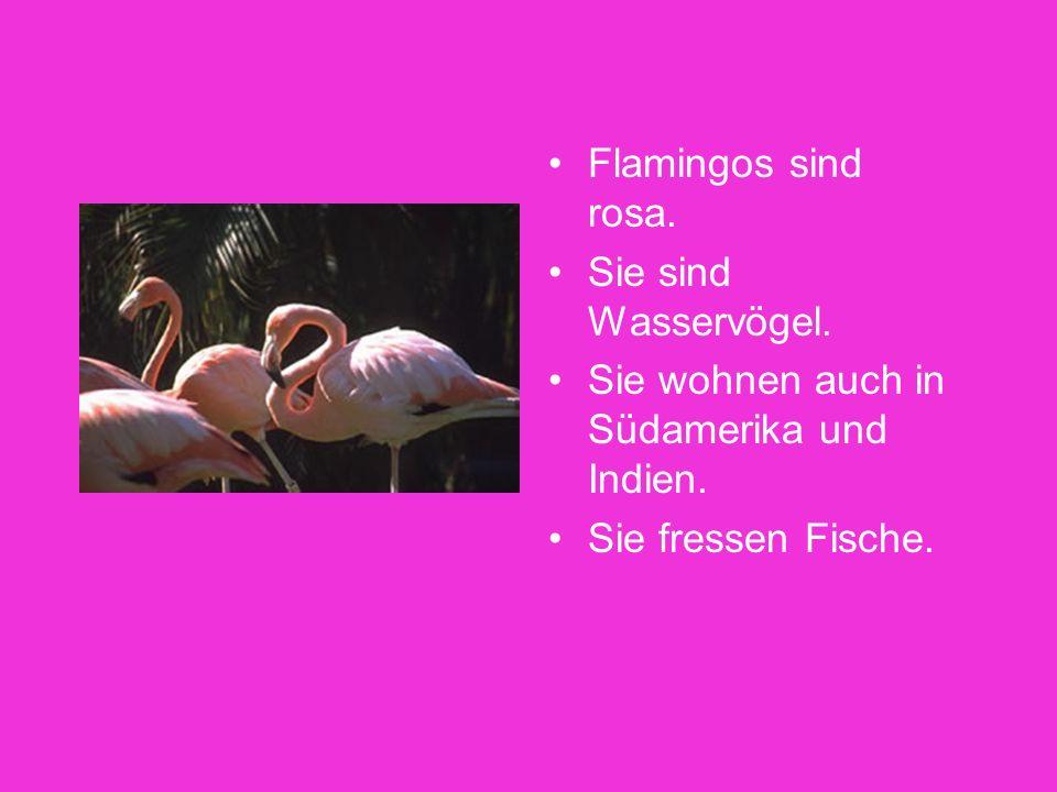 Welche Tiere wohnen auch in Afrika? Flamingos Elefanten Menschenaffen