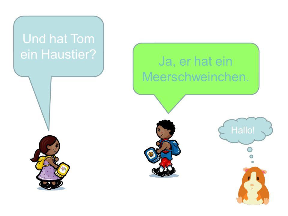 Welche Farbe hat Toms Meerschweinchen?.Sein Meerschweinchen ist braun und orange.