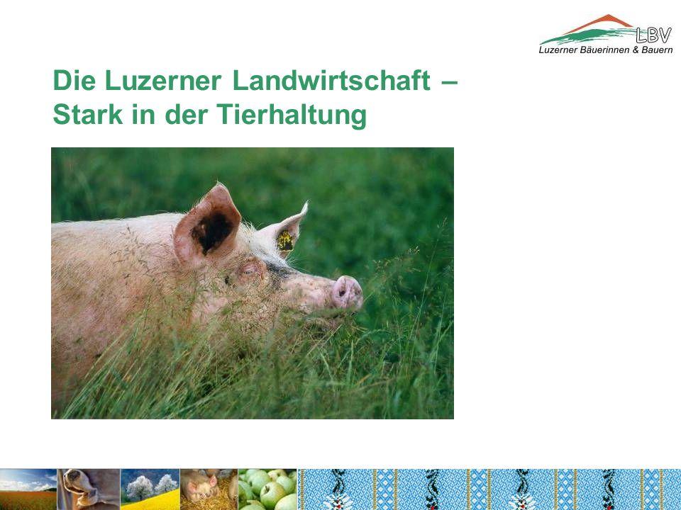 Die Luzerner Landwirtschaft – Stark in der Tierhaltung