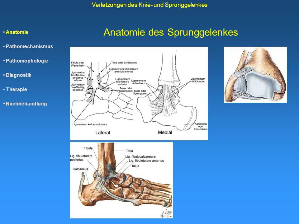 Anatomie Pathomechanismus Pathomophologie Diagnostik Therapie Nachbehandlung Verletzungen des Knie- und Sprunggelenkes Anatomie des Sprunggelenkes