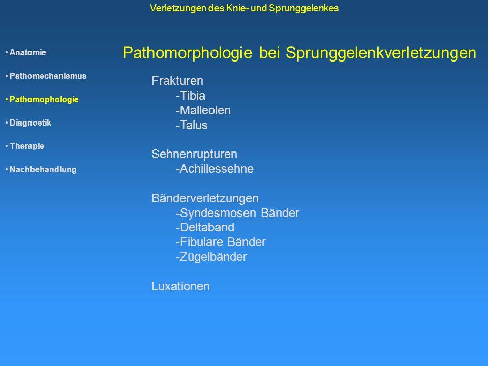 Anatomie Pathomechanismus Pathomophologie Diagnostik Therapie Nachbehandlung Verletzungen des Knie- und Sprunggelenkes Pathomorphologie bei Sprunggele