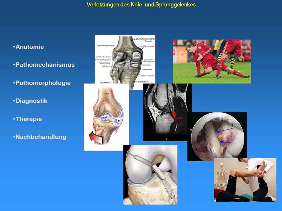 Anatomie Pathomechanismus Pathomophologie Diagnostik Therapie Nachbehandlung Verletzungen des Knie- und Sprunggelenkes Anatomie des Kniegelenkes