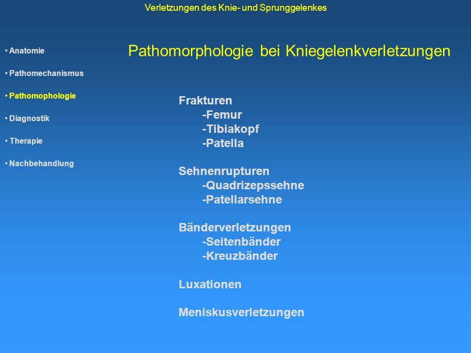 Anatomie Pathomechanismus Pathomophologie Diagnostik Therapie Nachbehandlung Verletzungen des Knie- und Sprunggelenkes Pathomorphologie bei Kniegelenk