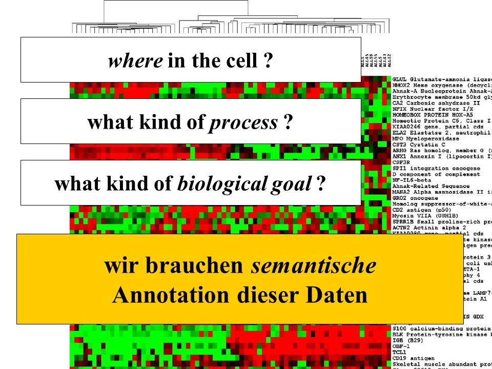 http://ifomis.org 16 where in the cell ? what kind of process ? wir brauchen semantische Annotation dieser Daten what kind of biological goal ?