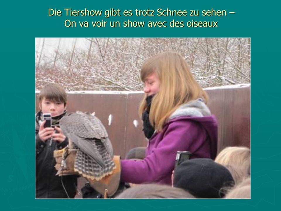 Die Tiershow gibt es trotz Schnee zu sehen – On va voir un show avec des oiseaux