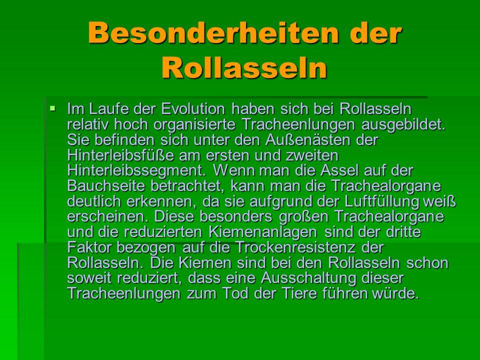Besonderheiten der Rollasseln Im Laufe der Evolution haben sich bei Rollasseln relativ hoch organisierte Tracheenlungen ausgebildet. Sie befinden sich