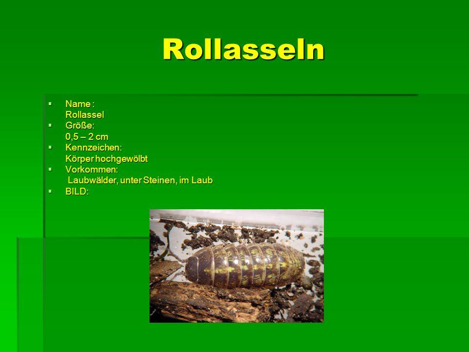 Rollasseln Name : Name : Rollassel Rollassel Größe: Größe: 0,5 – 2 cm 0,5 – 2 cm Kennzeichen: Kennzeichen: Körper hochgewölbt Körper hochgewölbt Vorko