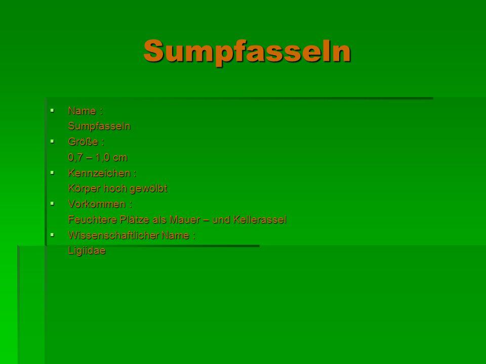 Sumpfasseln Name : Name : Sumpfasseln Sumpfasseln Größe : Größe : 0,7 – 1,0 cm 0,7 – 1,0 cm Kennzeichen : Kennzeichen : Körper hoch gewölbt Körper hoc