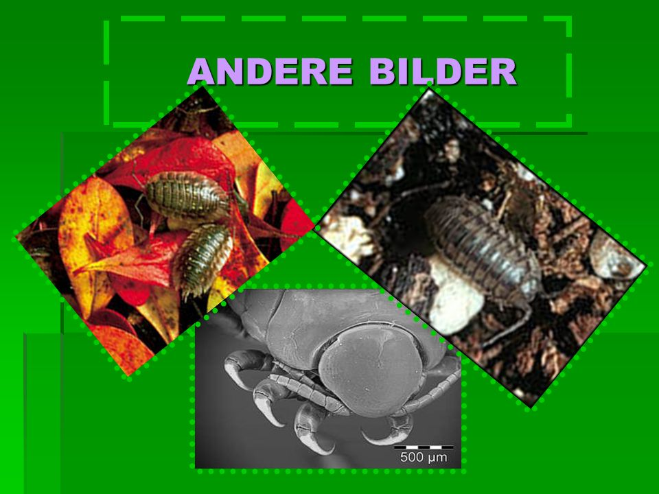 ANDERE BILDER ANDERE BILDER