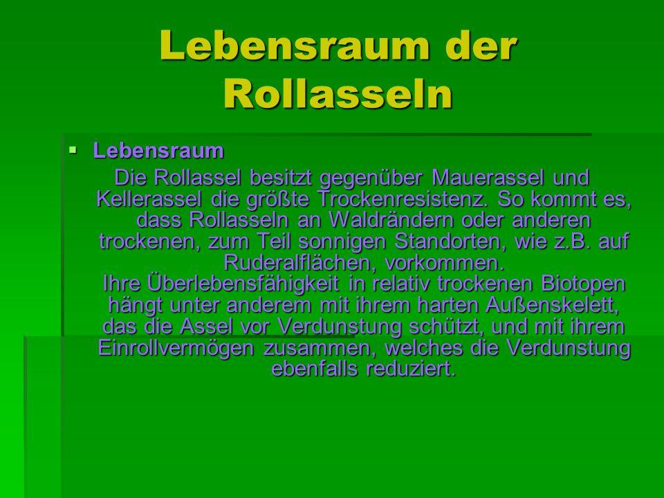 Besonderheiten der Rollasseln Im Laufe der Evolution haben sich bei Rollasseln relativ hoch organisierte Tracheenlungen ausgebildet.
